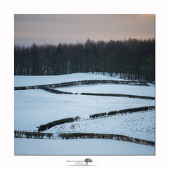 Hedgerow (shaun.argent) Tags: fields seasons shaunargent snow winter woods trees morning patterns hedgerow farming yorkshire