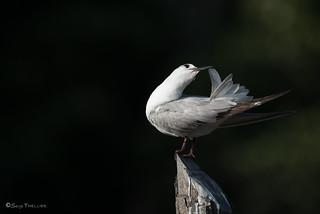3_Bird's choreography_DSC_4655