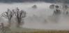 misty trees (lucafabbricesena) Tags: misty trees fog landscape nature field sanleo emiliaromagna morning mist winter italy