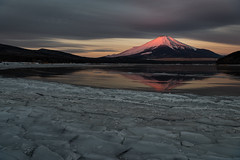 Majestic Pink (Yuga Kurita) Tags: fuji fujisan fujiyama mt mount japan landscape nature beautiful frozen freezing winter lake yamanaka yamanakako snowcappd snowcapped mountain pink red morning dawn sunrise cloud clouds reflection ice icy
