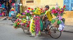 IMG_6193 Flower vendor, Hoi An, Vietnam (briancarrollphotos) Tags: hoianvietnam cycle streetvendor flowerseller candid streetlife hoian vietnam flickrtravelaward