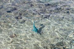 Blue Fish (FOXTROT|ROMEO) Tags: bonaire carib caribbean karibik shiff schiff ship travel reisen boat street reportage city cruise kreuzfahrt eos70d fish fisch water ocean