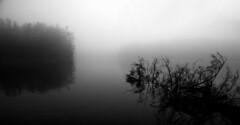 Fallen Tree in Fog (Faron Dillon) Tags: fog foggy fallen richmond hill ontario lake bond bw black white canon 5ds 24105l