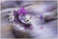 Venetian masks (aviana2) Tags: mask carnevale venice venezia italy aviana sonya7ii smileonsaturday