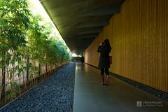 Garden to entrance of Nezu Museum (根津美術館) (christinayan01 (busy)) Tags: museum nezu tokyo japan kengo kuma building architecture perspective bamboo