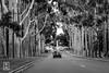 DSCF1092-2 (gkim1185) Tags: trees blackandwhite bw australia grove exit entrance perth kingspark