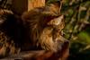 EOY.320.1_80 s.f_11.300.0 mm.4812.jpg (Jonitron) Tags: digitalphotography color tacomawa 2017 jonitron 28300mmf3556 nikon d610