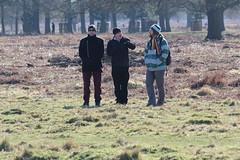 Joe, Chris and Craig in Bushey Park (ec1jack) Tags: bushey park kingston london england britain uk europe winter cold nature busheypark deer wildlife kierankelly canoneos600d ec1jack