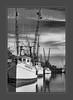 Darien, GA Shrimp Boats (tvj21) Tags: darien georgia boats shrimpboats