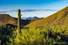 Mountains in the distance (doveoggi) Tags: 8200 arizona scottsdale mcdowellsonoranpreserve desert mountains saguaro sonorandesert