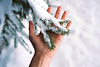 Un Noël dans les Alpes (Hëllø i'm Wild) Tags: analog film 35mm canonae1 kodakportra400 winter snow alps mountains cold nature hand tree bokeh dof
