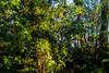 CAMINO DEL NORTE. PRIMEROS RAYOS DE SOL (bacasr) Tags: luz viajando follaje thicket caminando nature sunlight foliage hojas maleza trees verde caminodelnorte coruña backpacking leaves arzúa arboles galicia spain travelling españa naturaleza green brushwood acoruña caminodesantiago thewayofsaintjames