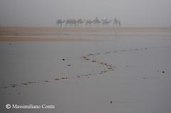 Miraggio - Essaouira, Marocco (massimiliano contu) Tags: essaouira marocco morocco camel cammello camels cammelli carovana deserto spiaggia mare sahara marrakech berberi arabi marocchini arabic arab sabbia sand desert sea ocean oceano beach berber caravan