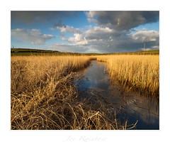 """Golden"" - Gunwalloe, Cornwall (Joe Rainbow) Tags: gunwalloe joerainbow landscape coast coastal cornwall natural nature winter reeds golden"