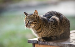 kittens (56) (Vlado Ferenčić) Tags: kitty vladoferencic kittens vladimirferencic catsdogs cats animals animalplanet zagorje hrvatska croatia nikond600 nikkor8020028 klenovnik