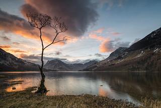 sunrise colours at the tree (explored)