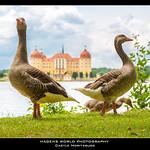 Castle Moritzburg thumbnail
