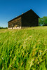 rocks ... grass ... wood (Marty Hogan) Tags: menomineecounty upperpeninsula michiganbarn barn farm field
