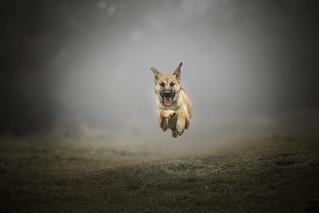 Maisie in the mist.