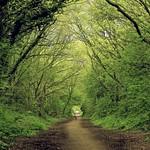 Open Trail thumbnail