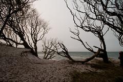 Darß Weststrand (difridi) Tags: difridi darss solitude ruhe einsamkeit weststrand ostsee balticsea norddeutschland herbst autumn zingst fischland mecklenburgvorpommern meer sea baum landschaft strand beach landscape