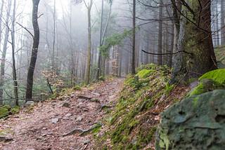 In den dunstigen Wald