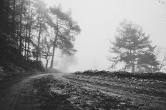 The unknown future (mripp) Tags: art vintage retro old black white mono monochrom landscape landschaft nature natur bavaria bayern leica q forest wald