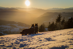 01/12 B Leia & Nora, Don't stop, go your way (shila009) Tags: leia nora roughcollie dog perro snow mountains alps alpes invierno winter sunset atardecer light luz dogs perros 0112