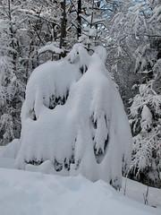 Zaljubljena pingvina / Kissing penguins :-) (Damijan P.) Tags: zima winter sneg snow pohorje trijekralji slovenija slovenia prosenak