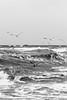 Stürmische Ostsee in Hohenfelde (Professor Besserwisser) Tags: möwen ostsee hohenfelde balticsea marbáltico mar wellen olas waves stürmisch blackandwhite schwarzweis stürmischesee wildesee ostseeschwarzweis balticseablackandwhite hohenfeldeostsee hohenfeldestrand ostseehohenfelde schleswigholstein blancoynegro marblancoynegro nikond3400 d3400 1855mm nikkor1855mm kreisplön gaviotas gavines gulls seagulls seascape strandhohenfelde rauesee alemanha alemania norddeutschland deutschland germany northgermany alemaniadelnorte duitsland allemagne oostzee merbaltique itämeri östersjön gabbiani svartvit margruesa roughsea