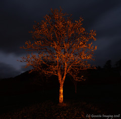 The Camping Tree (GeoVista Imaging) Tags: trees firelight night longexposure exmoor glow fireglow winter exford lichen canon1740f4l sigmamc11