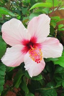 big flower :)