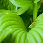 Green Visitor thumbnail