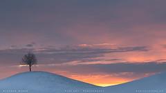 ~ morning symphony ~ (SteffPicture) Tags: morgenstimmung morning morninglight landscape snow sky baum landschaft gras steffpicture stephanreber strasse feld wald landstrase himmel myswitzerland sunrise morgenrot tree sony sonyalpha alpha7r3
