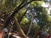 G0121320 (harleyhurricane1) Tags: line zip zipline ziplinepark dadecityflorida treehoppers centralflorida largestziplineparkincentralfl dadecity