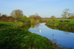 The water meadows at Grantchester (Jayembee69) Tags: uk england english gb britain british unitedkingdom landscape cambridgeshire cambs water riverside meadow watermeadow winter swan cam grantchestermeadows grantchester