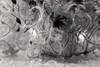 Comme des plumes (Elyane11) Tags: plante pluie monochrome goutte