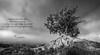 OAK (Kambo Dscha) Tags: oak jollytars wood tree rock nikon kambodscha england uk ship