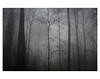 U N T I T L E D  [ F O G  # 5 ] (bruXella & bruXellus) Tags: parcduden brüssel bruxelles brussels brussel belgien belgique belgium belgië leicax1 blackwhite bnw monochrome brume brouillard nebel fog