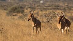 Nairobi-Nationalpark-0475 (ovg2012) Tags: kenia kenya nairobi nairobinationalpark