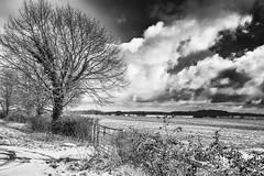 IMG_6752-Edit (mollyblobs) Tags: cambridgeshire castor location unitedkingdom arable blackandwhite monochrome snow