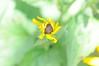 swirl (ladybugdiscovery) Tags: yellow swirl garden flower blackeyedsusan