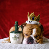 Sven the King 2 (charmainesenaphotography) Tags: purple red bokeh pets animals dogs puppies sven backdrop portrait props whiskey king englishbulldog bulldogs englishbulldogs bullies