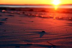 Sonnenuntergang am Strand (Vrenna) Tags: langeoog sonnenuntergang sunset gegenlicht meer nordsee northsea strand beach wasser sand flinthörn sonne winter wintersonne fotografie canon canoneos700d muschel