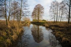 Winter Calm (taipan_pl) Tags: poland polska river water winter nature naturepics amazing trees tree landscape kalamanka kałamanka koden kodeń podlasie lubelskie bialapodlaska biała podlaska bialski rzeka zima drzewa woda przyroda krajobraz
