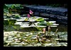 Duke Gardens July 2015 9.26.44 PM (LaPajamas) Tags: nc flora dukegardens gardens