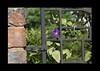Duke Gardens July 2015 9.02.39 PM (LaPajamas) Tags: nc flora dukegardens gardens