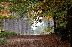Lead me home. (pstone646) Tags: woodland forest nature trees leaves kent view track flora
