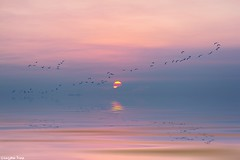 This grand show is eternal (gusdiaz) Tags: sunrise sunset canon canonphotography nature naturephotography beach sand water reflection seagulls colors pastels pasteles colorido arena playa mar agua reflejo hermoso beautiful relajante relaxing