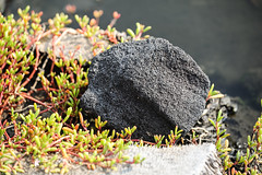 Basalt Boulder (wyojones) Tags: hawaii puuhonuaohōnaunaunationalhistoricalpark honaunau royalgrounds fishponds heleipālalafishponds naturallyoccurring brackishwater ponds pools water anchialineponds fish basalt lava boulder